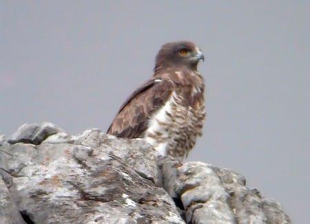 Birdwatching in Malaga