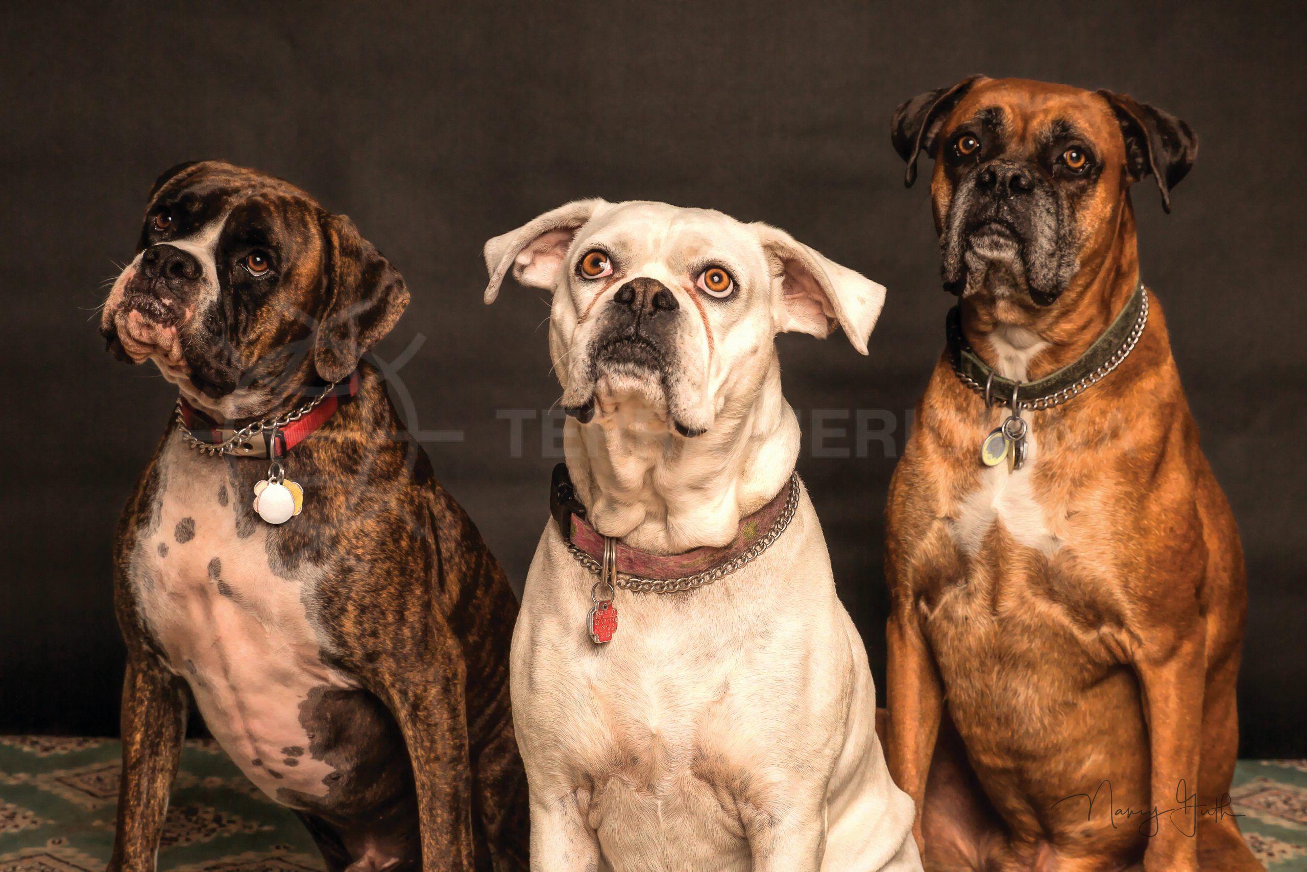 Des installations adaptées aux chiens sur la Costa del Sol
